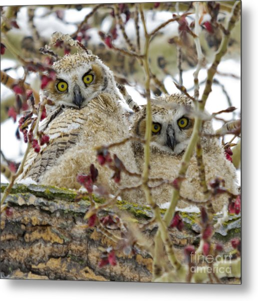 Wide-eyed Wonders Metal Print