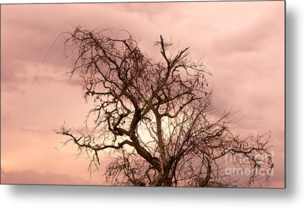 Wild Afternoon Metal Print