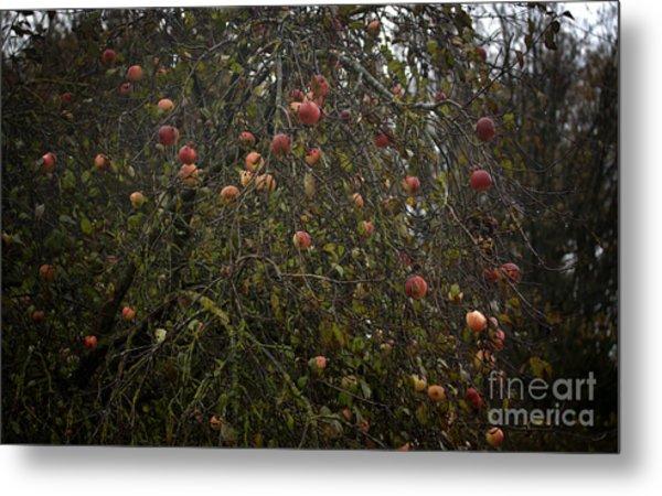 Wild Apple Tree Metal Print by Jolanta Meskauskiene