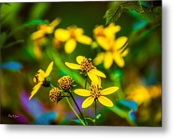 Flowers - Wild Bouquet  Metal Print by Barry Jones