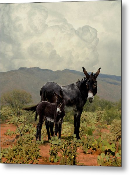 Wild Burros Of Tucson Metal Print