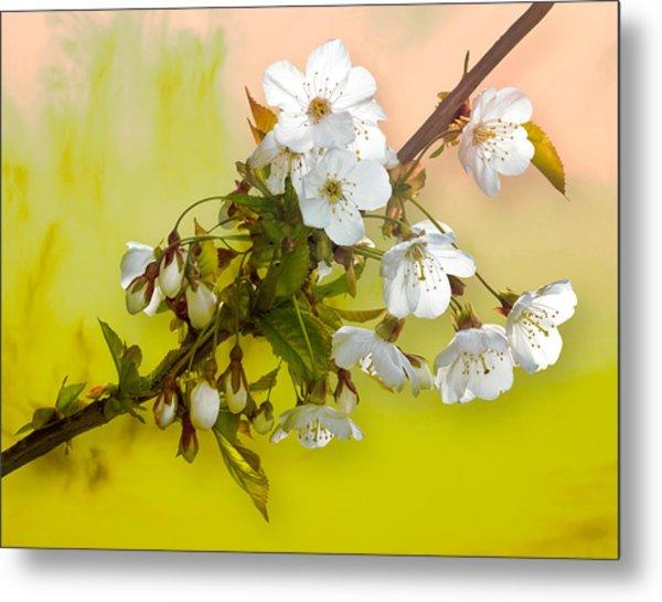 Wild Cherry Blossom Cluster Metal Print