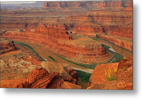 Wild Flowers At Dead Horse Point. Metal Print