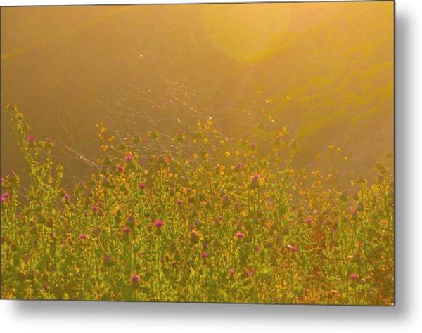 Wild Flowers With Webs Metal Print