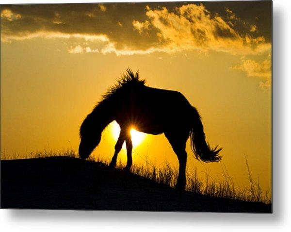 Wild Horse And Setting Sun Metal Print