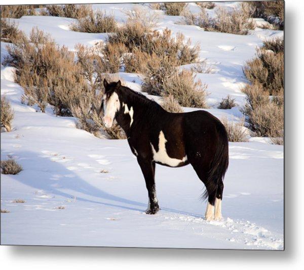 Wild Horse Stallion Metal Print