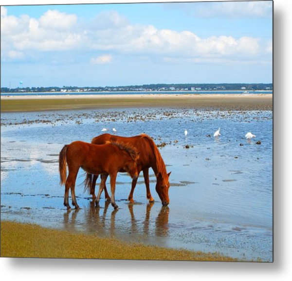 Wild Horses And Ibis Metal Print