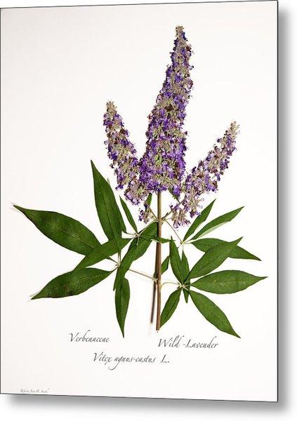 Wild-lavender 1 Metal Print