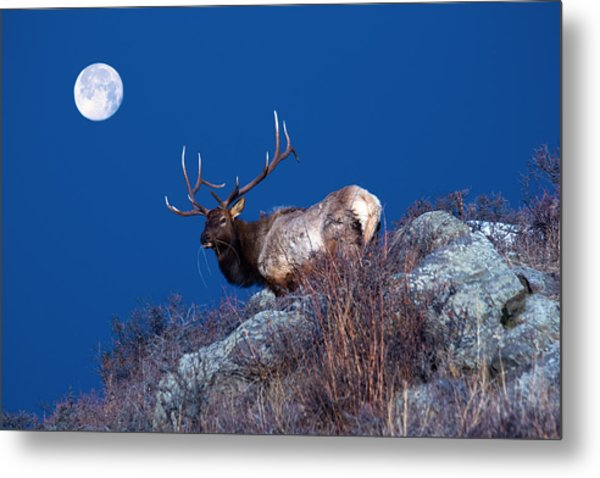 Metal Print featuring the photograph Wild Moon by Shane Bechler