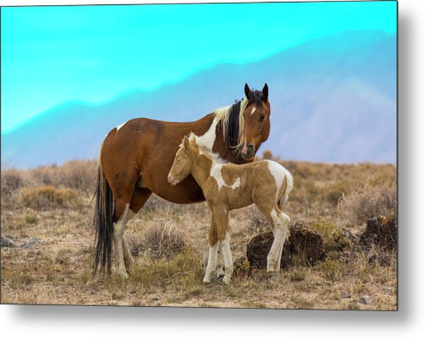 Wild Mustang Horses In The West Desert Metal Print by Don Cook