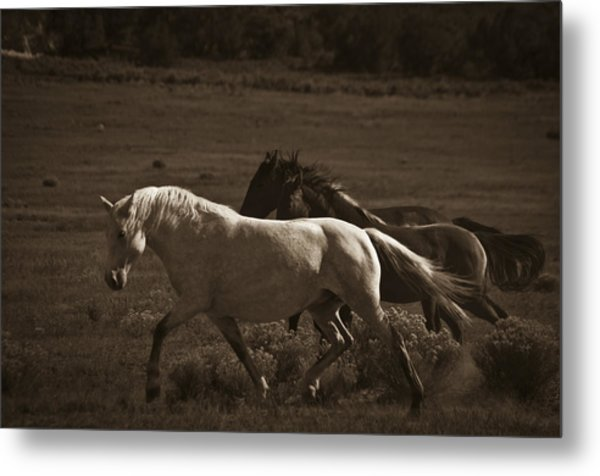 Wild Mustangs Of New Mexico 10 Metal Print