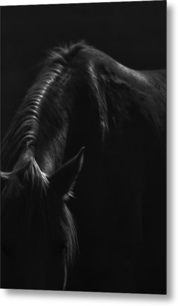 Wild Mustangs Of New Mexico 14 Metal Print