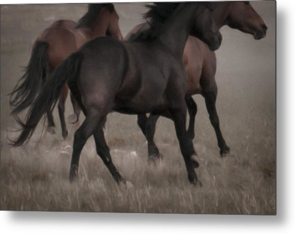 Wild Mustangs Of New Mexico 16 Metal Print