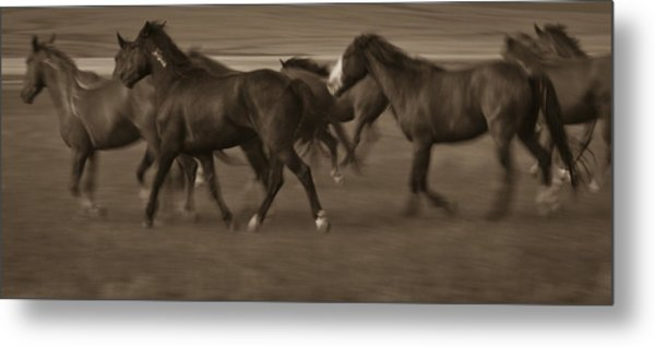 Wild Mustangs Of New Mexico 17 Metal Print