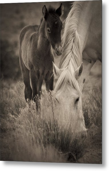 Wild Mustangs Of New Mexico 19 Metal Print