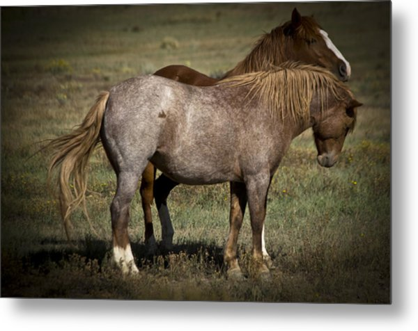 Wild Mustangs Of New Mexico 2 Metal Print