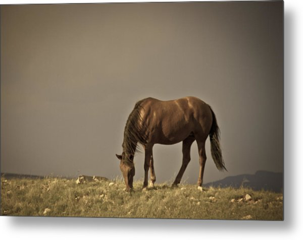 Wild Mustangs Of New Mexico 20 Metal Print