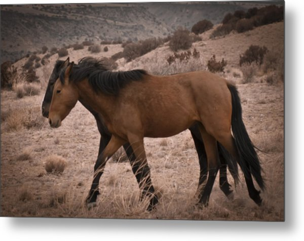 Wild Mustangs Of New Mexico 23 Metal Print