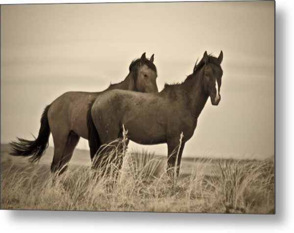 Wild Mustangs Of New Mexico 3 Metal Print