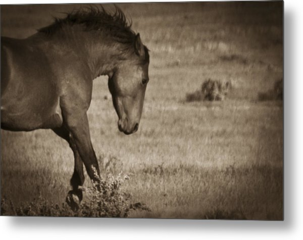 Wild Mustangs Of New Mexico 31 Metal Print