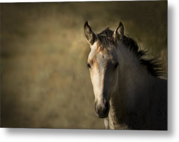 Wild Mustangs Of New Mexico 35 Metal Print