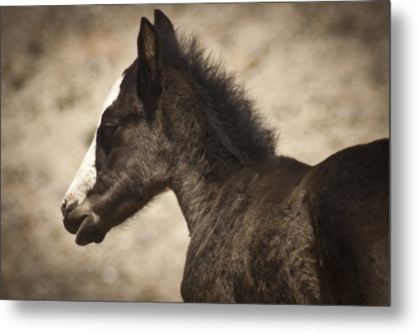 Wild Mustangs Of New Mexico 37 Metal Print