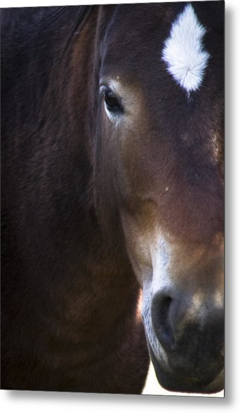 Wild Mustangs Of New Mexico 42 Metal Print