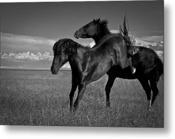 Wild Mustangs Of New Mexico 9 Metal Print