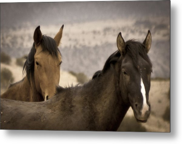Wild Mustangs Of New Mexico Metal Print