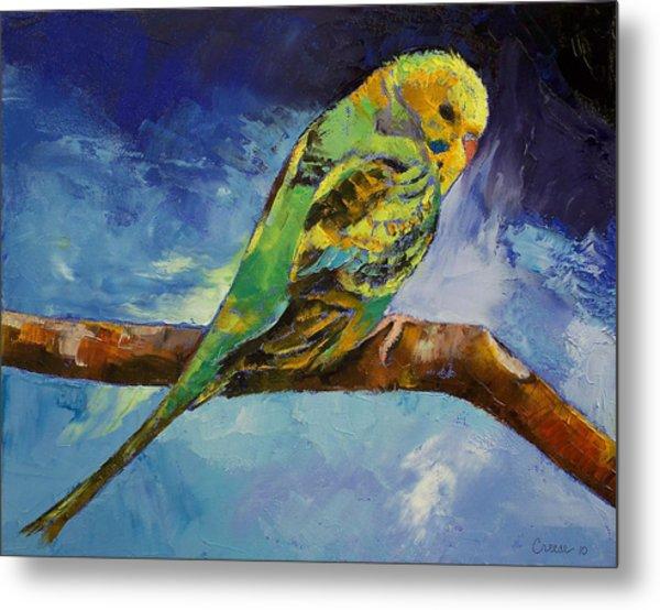 Wild Parakeet Metal Print