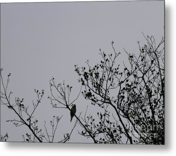 Metal Print featuring the photograph Wild Parrot Of San Francisco by Cynthia Marcopulos
