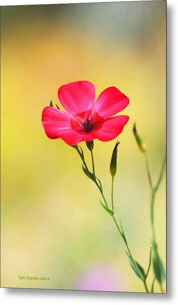 Wild Red Flower Metal Print