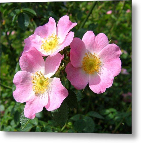 Wild Roses 1 Metal Print