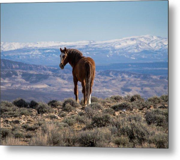 Wild Stallion Of Sand Wash Basin Metal Print