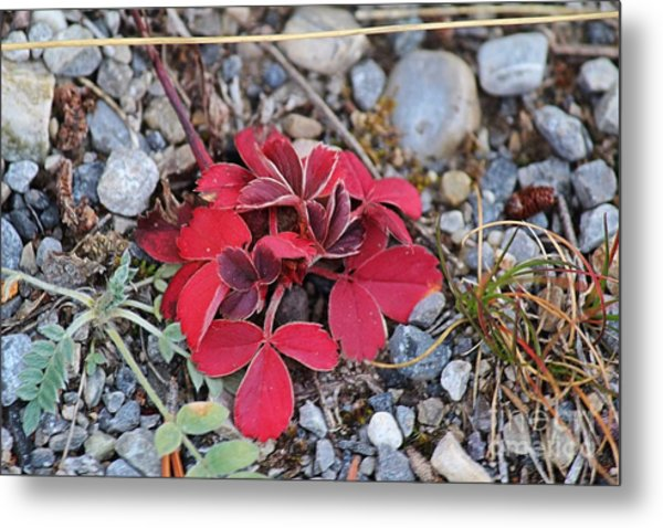 Wild Strawberry Metal Print