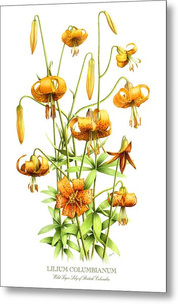 Wild Tiger Lilies Metal Print