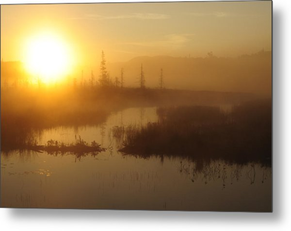 Wilderness Sunrise Metal Print