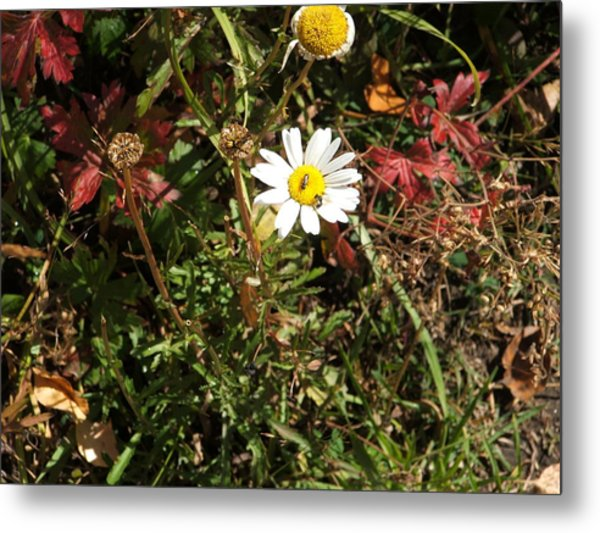 Wildflower @ Kit Carson Metal Print