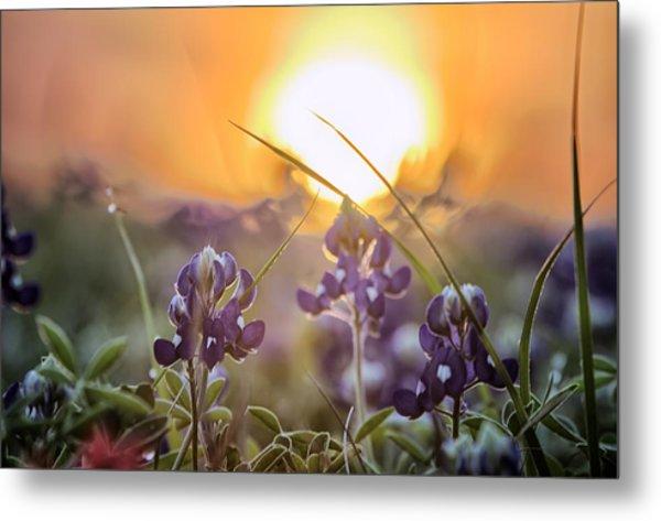 Wildflower Glow Metal Print