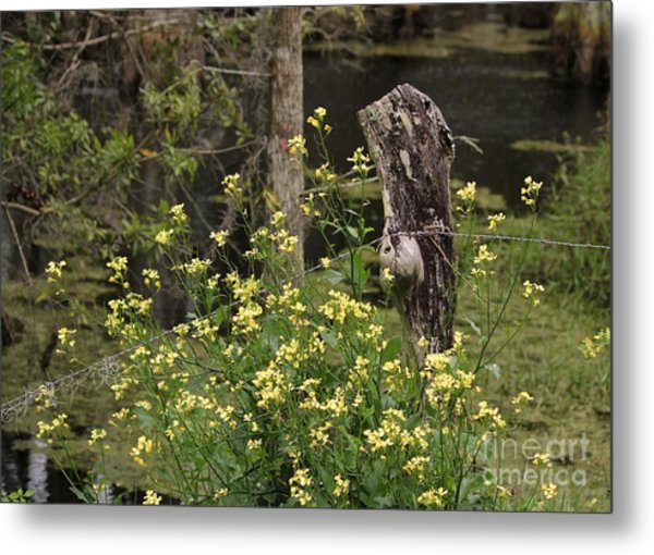 Wildflowers And Barbed Wire Metal Print by Theresa Willingham