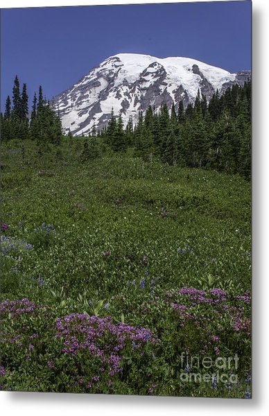Wildflowers And Mt Rainier Summit Metal Print