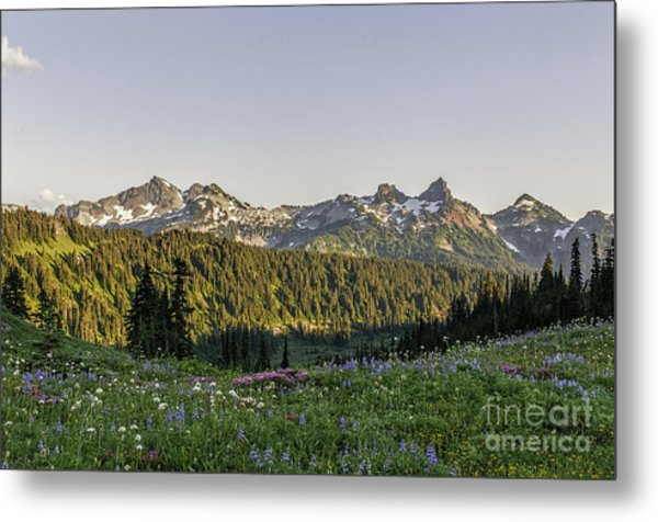 Wildflowers And The Tatoosh Range Metal Print