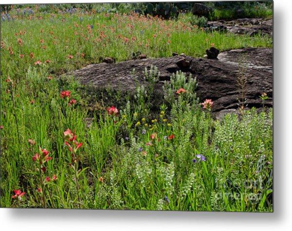 Wildflowers At Reveille Peak Ranch Metal Print by Cathy Alba