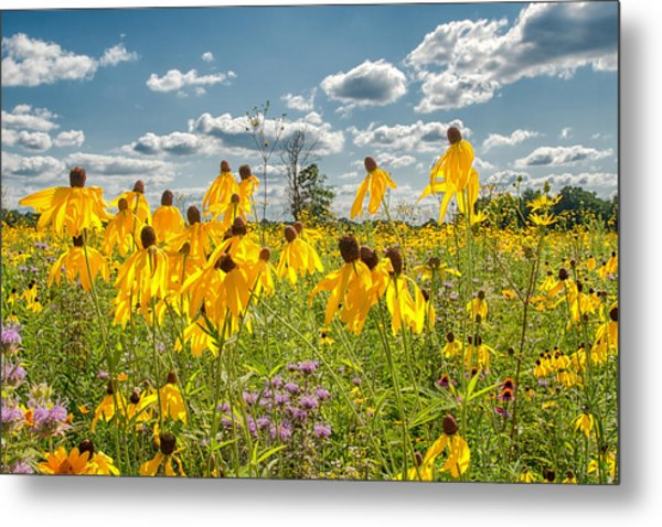 Wildflowers Dance Metal Print