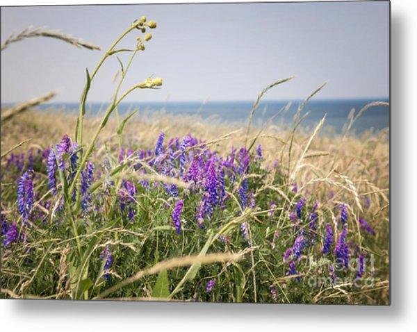 Wildflowers On Prince Edward Island Metal Print