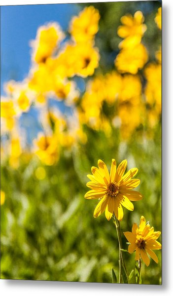 Wildflowers Standing Out Abstract Metal Print