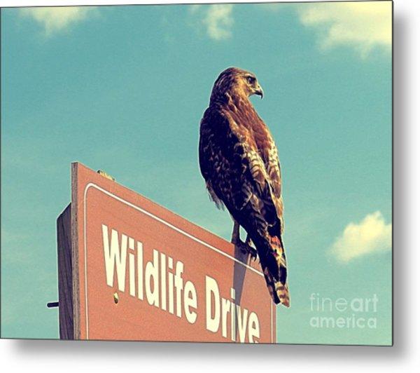 Wildlife Drive Greeter Metal Print