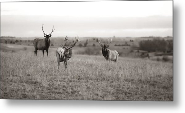 Wildlife Old School Metal Print