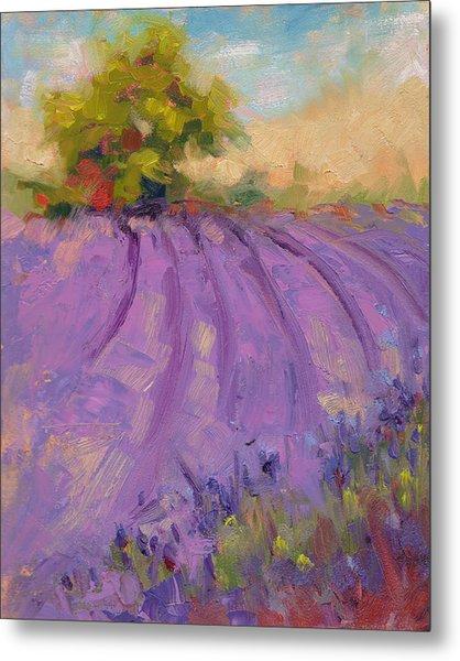 Wildrain Lavender Farm Metal Print