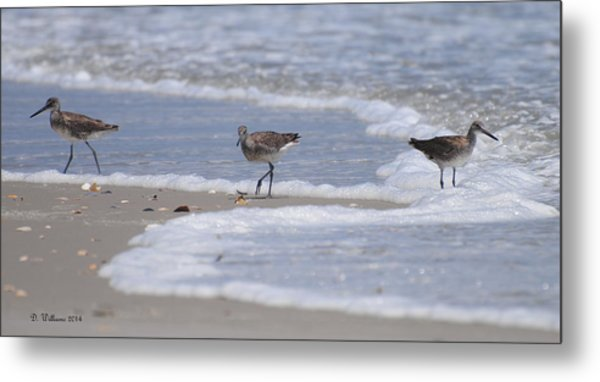Willets On Ocracoke Metal Print